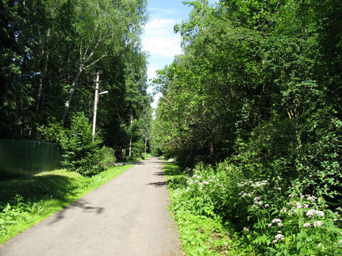 Рублево-Успенское ш. 20км. ран Ново-Дарьино лесной участок 76 соток. - Фото 1