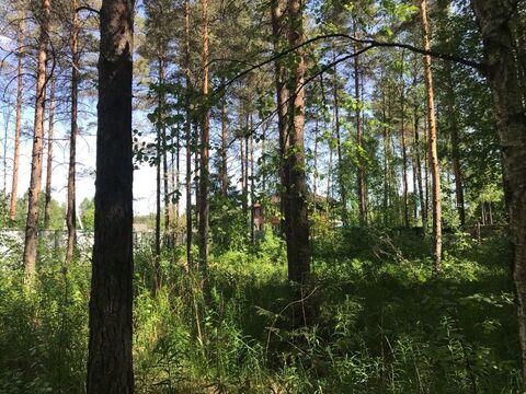 Участок в Васкелово 28 соток ИЖС (электричество, водопровод) - Фото 1