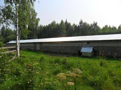 Продажа действующего кфх в Тверской области д.Заболотье - Фото 5