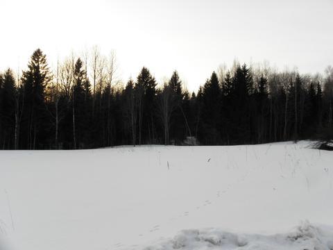 12 соток в д. Неверовское - Фото 2
