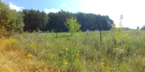 Земельный участок 14 соток в сосновом бору на берегу реки д. Айдарово - Фото 4