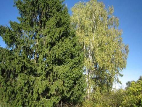 15 соток земли с домом в деревне Демидово в 100 км. от МКАД - Фото 5