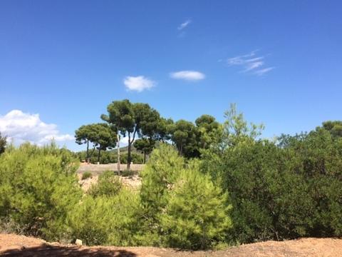Продажа земельного участка в Испании - Фото 3