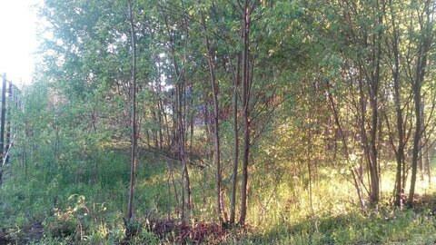 Продажа земельного участка в деревне Судимля - Фото 3