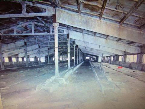 Продается здание молочного комплекса на 1000 доильных коров - Фото 4