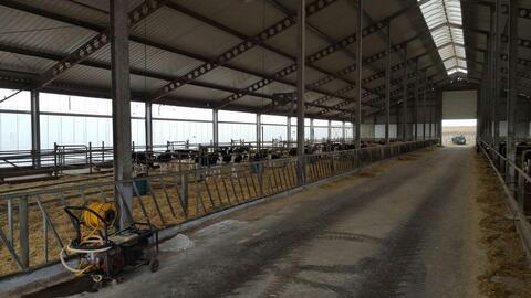 Молочно-животноводческая ферма на 2000 голов с молодняком - Фото 3