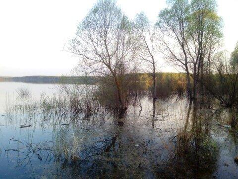 Участок 15 соток в деревне на берегу Можайского водохранилища (ПМЖ). - Фото 3