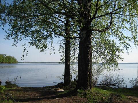 Участок 1 Га на 1 линии р. Волга с лесным массивом, г. Конаково - Фото 1