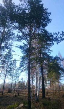 Участок в п.Изумрудный (ровный!) - Фото 2