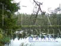 Продажа участка, Жабенец, Стругокрасненский район - Фото 4