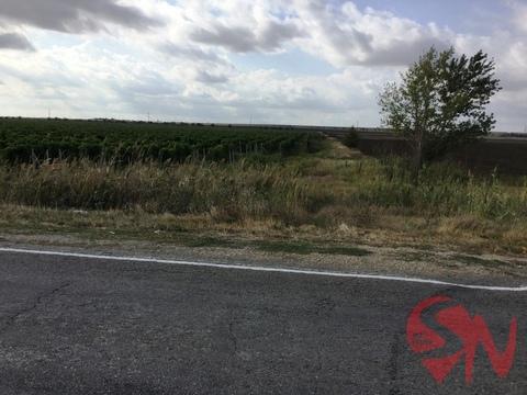 Продам виноградник 4 гектара в Феодосии - Фото 4