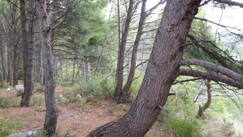 Срочная продажа 20 соток в Алупке в сосновом лесу - Фото 2