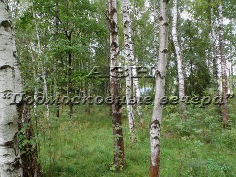 Новорижское ш. 47 км от МКАД, Холщевики, Участок 15 сот. - Фото 1