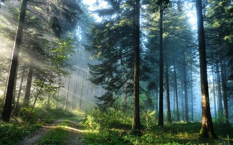 Предлагается земельный участок 13 соток в кп Смольный в 18 км от КАД - Фото 5