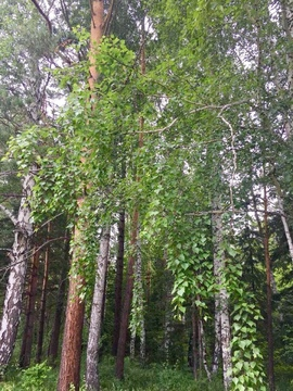 Продам участок Элита ИЖС 20сот лес - Фото 3