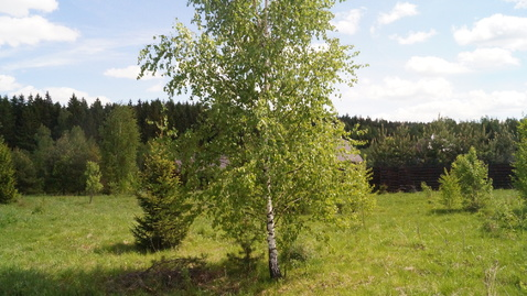Продается земля 26.85 сот. д. Веткино (Коллонтай) - Фото 5