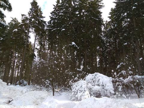 Ильинское ш. 17км. д. Бузланово участок 15 соток ИЖС - Фото 2