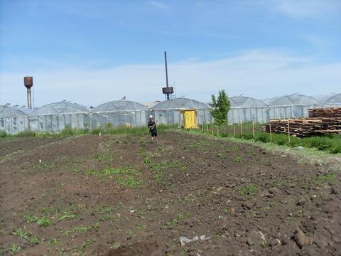 Земельный участок в п. Черницк - Фото 2