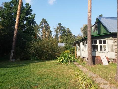 Шикарный участок 29 сот. с соснами в п. Загорянский, 17 км. от МКАД - Фото 5