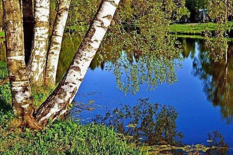 Продам 10 гектаров земли, дачное х-во, за 500 тысяч рублей - Фото 1