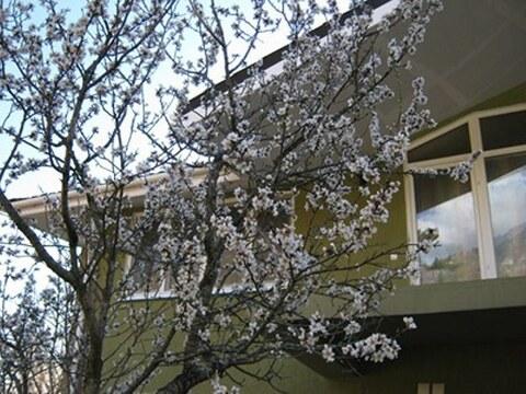Продам отличный дом 748 м в Алупке на уч 28 соток - Фото 2