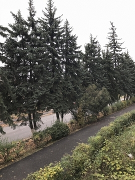 Продажа квартиры, Железноводск, Ул. Чапаева - Фото 5