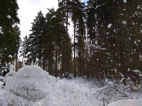 Ильинское ш. 17км. д. Бузланово участок 15 соток ИЖС - Фото 4