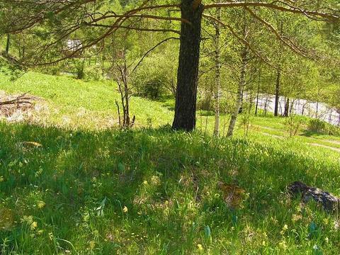 Продажа участка, Узнезя, Чемальский район - Фото 2