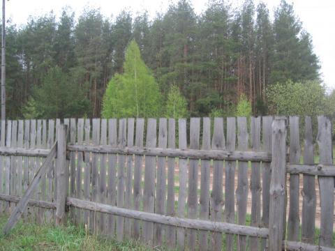 Квадратный участок рядом с хвойным лесом - Фото 1