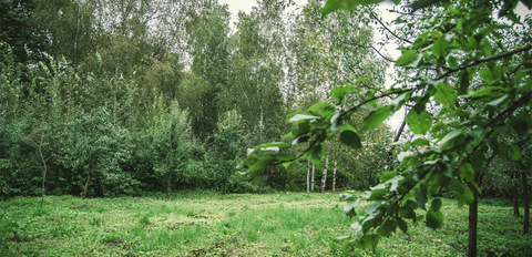 Прилесной участок для постоянного место жительства! Прописка! - Фото 4