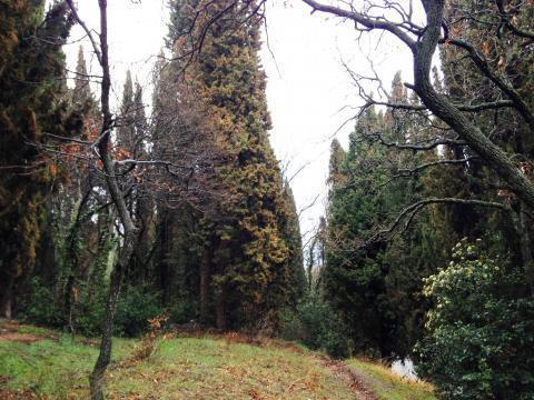 Участок 8 соток в окружении кипариса - Фото 4