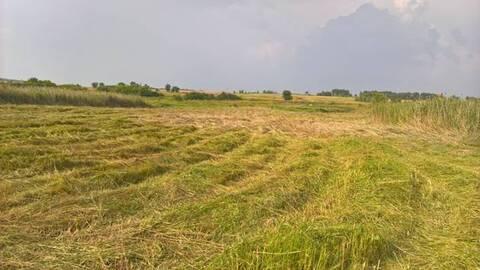Участок сельхозназначения в Верхнемамонском районе - Фото 3