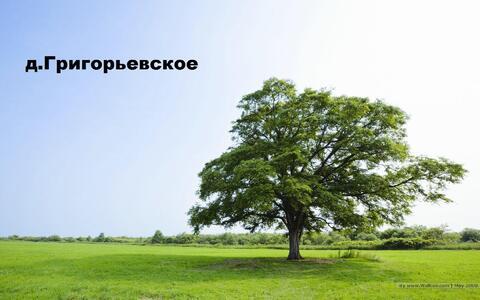 Продам земельный участок 12 соток (ЛПХ), д.Григорьевское