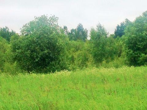 Продажа участка, Бирюли, Пушкиногорский район - Фото 1