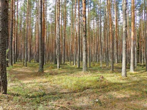 Продам участки на берегу Волги Ново-Окатово г. Калязин - Фото 5