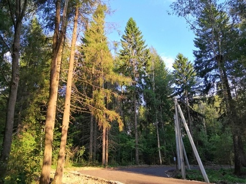 Продаётся земельный участок 8 соток с лесными деревьями, рядом с го. - Фото 1