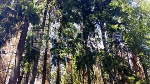 Лесной участок 8 сот. - Фото 3