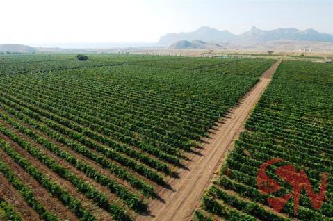 Продам виноградник 4 гектара в Феодосии - Фото 1