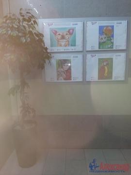 Продам 1к. квартиру. Туристская ул., Купить квартиру в Санкт-Петербурге по недорогой цене, ID объекта - 319605095 - Фото 1
