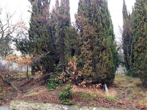 Участок 8 соток в окружении кипариса - Фото 2