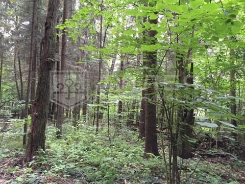Лесной участок 16 сот. - Фото 1
