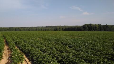 Продается ровный, сухой земельный участок, площадью 71,4 га - Фото 2