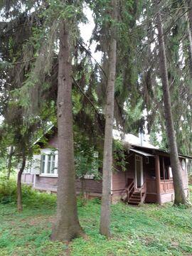 Участок 16 соток с лесными деревьями, Правдинский - Фото 4