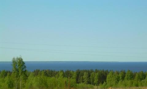 Продается участок у Финского залива,48 соток, дер.Валяницы - Фото 1