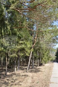 Лесной участок 28 сот. - Фото 5