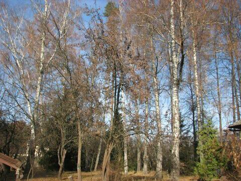 Участок 30,5 сот в п Первомайский 3 км от г Королёв, 15 км. от МКАД - Фото 2