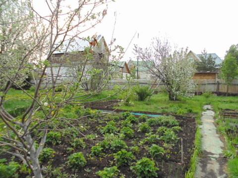 Продам садовый участок СНТ Труд - Фото 5