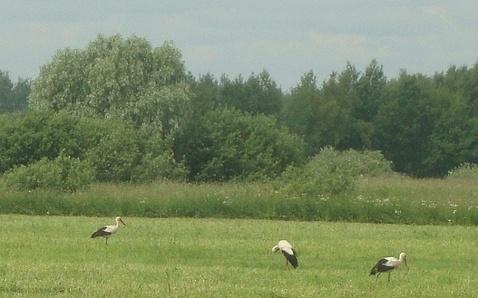 Продам земельный участок в деревне Плашкино, Новгородский район - Фото 2
