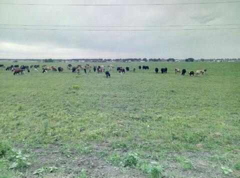 Продажа фермы , коровник в белгороде - Фото 4