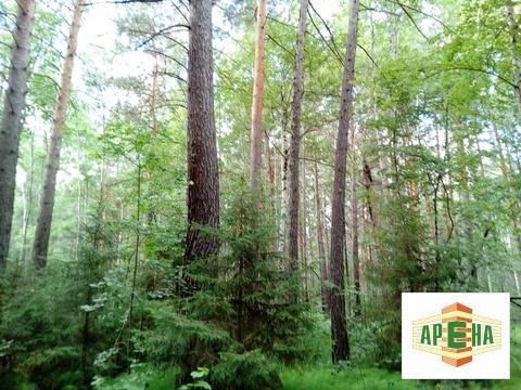 Участок в лесу у реки - Фото 1